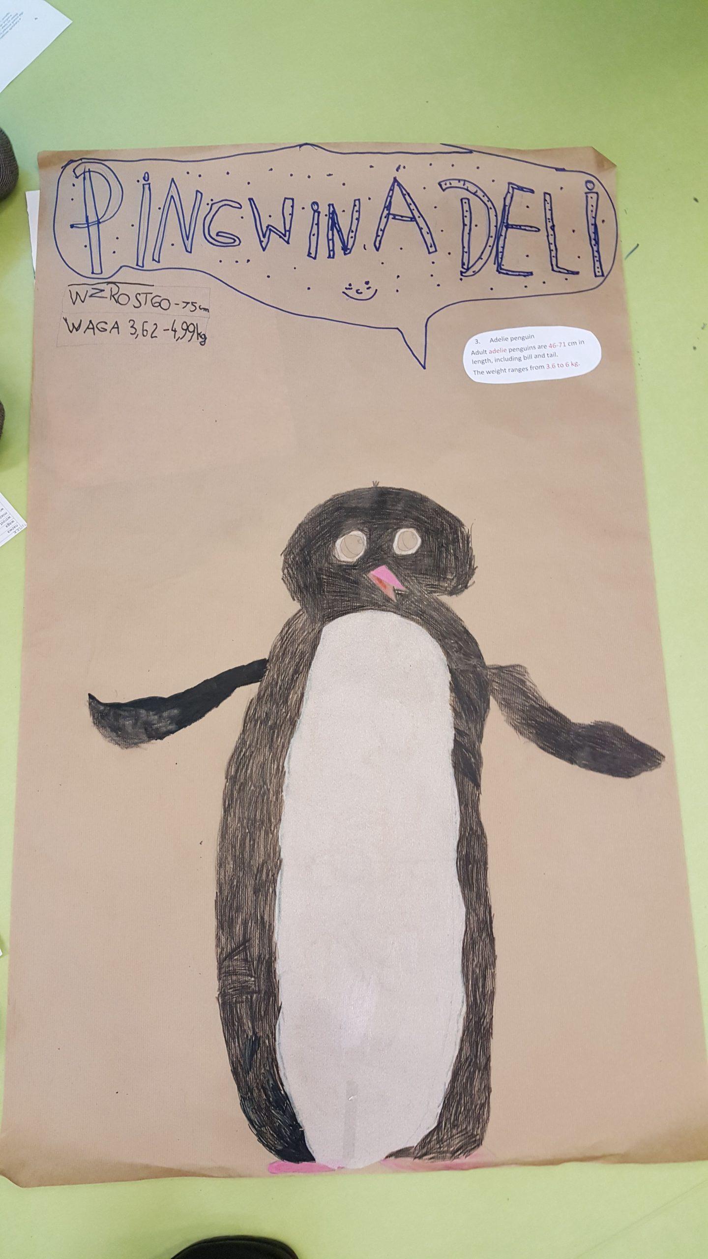 Poznaliśmy różne gatunki pingwinów